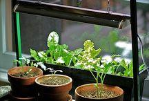 Gardening / Vegetable garden