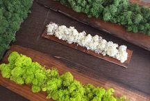 Lichen by Studio Garden