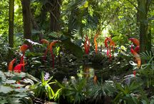 Chihuly at Fairchild, 2015 / by Fairchild Tropical Botanic Garden