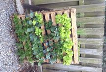 Garden Ideas / Space savers for a full impact tiny garden space