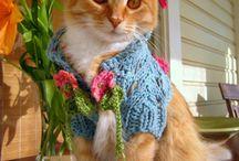 Kitty Cat Cutest Knits