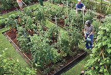 Garden/ Yard Ideas / by Sophie Huggins