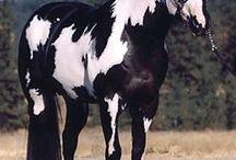 Αθλητικά άλογα