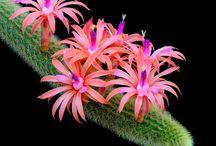 cactus bellos! !