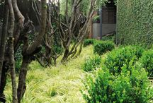 Refiloe Garden ideas