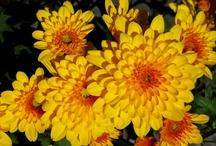 Flowers - My Pics