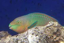 Aquatic/Marine Bio