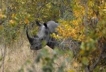 Kruger Park (South African )