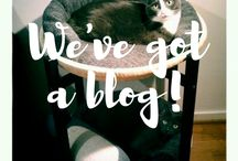 Blog news / New posts from our blog www.themoomincats.com