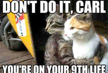 Cat memes | Funny cat images / cat meme , cute and funny memes relating to cats and kittens