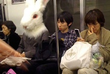 Japan Transit