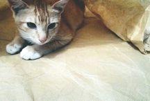 Meet Afika