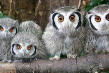 Owls / by Cindy Johnson