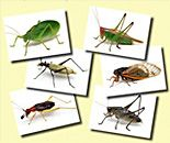 Insect crafts and activities