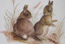 Illustrazioni / Coniglietti