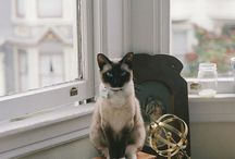 Cats Are Cooler / Cats Galore / by Christen Campbell