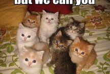 kitties ☺