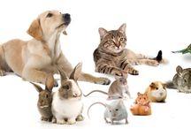Pet ürünleri / kedi ve  köpekler için birbirinden farklı modellerde tasmalar , papyonlar, yataklar, taraklar ,oyuncaklar ,mama kapları....vs  kuş ve hamsterlarınız için kafesler çeşit ve model seçenekleriyle pintistore.com 'da