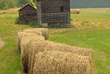 På landet