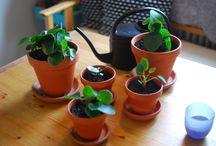 Växter och sånt
