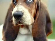 dog faves / by Sheila Bart Bernhardt