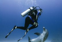 Diving / The best diving and underwater photography.