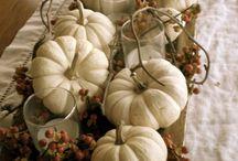 Pumpkins / Pumpkin mania / by Claire Rose