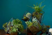 GARDEN: TERRARIUMS / Mini botanical's paradises