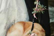 Mariage | Les animaux