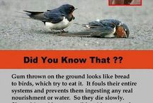 Pest Facts / Amazing & never heard-off facts about some of the most dangerous & innocent pests.