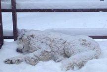 Snow dogs / Snow dogs