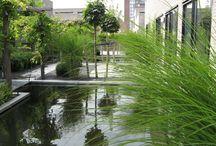 Design Vijvertuin / Een designtuin met twee strakke vijvers met een rvs randafwerking. De vijvers worden verbonden door middel van een loofgang van Blauwe regen. Bijzonder detail zijn de eilanden die in de vijvers liggen en de stalen roosters die de brug vormen tussen de vijvers.  Deze tuin is aangelegd door: Lex van Wijk Hoveniers!