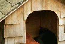 cosas yconsejos para mi gato HOPPER