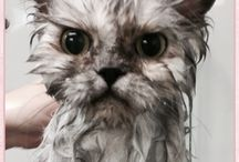 Cat Grooming / All breeds groomed at our salon