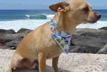 Bandanas / The Island Doggie bandana is great for indoors or playing in an enclosed dog park.  Simply fold over the triangular flap so tip points down and fasten strap behind their neck with Velcro closure.  Always keep a close watch on your dog when not using a harness and lead.