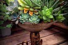 Moje milované k rostlinky