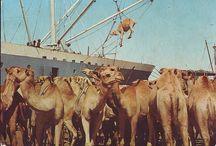 Somalia/Nature/Animals.