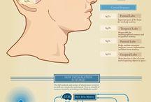 Brain - Mozog