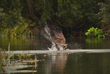 Tiere am Gewässer / Tiere die man am Gewässer beobachten kann