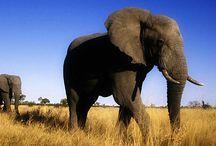 Botswana reizen / Prachtige locaties in Botswana