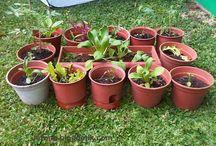 HP 0856-4347-4222, Benih Sayuran Murah, Bibit Sayuran Unggulan / Benih Sayuran, Benih Sayuran Murah, Benih Sayuran Organik, Benih Sayuran Import, Benih Sayuran Unggul, Bibit Sayuran Organik, Bibit Sayuran Murah, Bibit Sayuran Hidroponik, Bibit Sayuran Yang Cepat Tumbuh, Harga Bibit Sayuran Murah, Beli Bibit Sayuran Murah, Benih Cabe Rawit Unggul, Benih Cabe Rawit Terbaik, Benih Cabe Tahan Virus, Benih Sawi Hidroponik, Benih Sawi Manis, Benih Kubis Unggul, Benih Kubis Hibrida, Bibit Seledri Unggul, Bibit Seledri Import - HP 0856-4347-4222 -