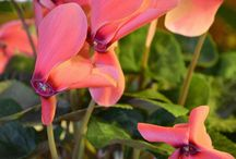Valentines Day Gifts for Gardeners