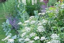 White garden — Белый сад