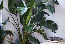 Inside Vegetation
