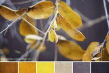 Color Pallette - My Fav