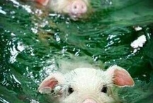 Pigs / Wild pigs, pink pigs all pigs!