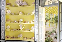 she sells seashells / by Kimberley Shaw- Fuentes