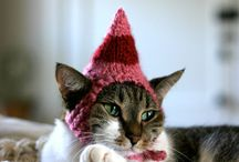 Cats in hats plotting revenge on their hoomuns / Title says it all...