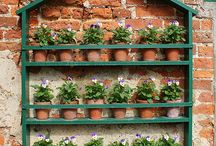 Garden teather, auricula and ather plants