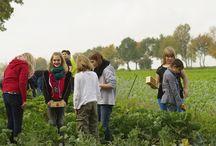 Pilotprojekt / Eindrücke von der ersten GemüseAckerdemie an der Realschule Bedburg in 2013.